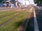 Záhradnícka ulica v Bratislave - zatrávnenie električkovej trate